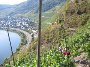 moselle valley 7